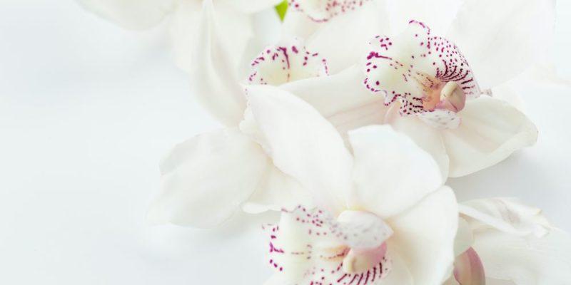 Konstgjorda blommor för alla tillfällen