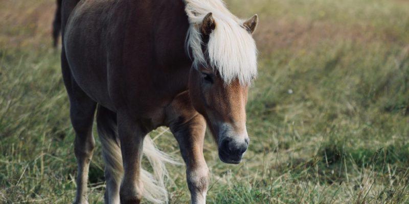 Njut av ponnyridning i Stockholm